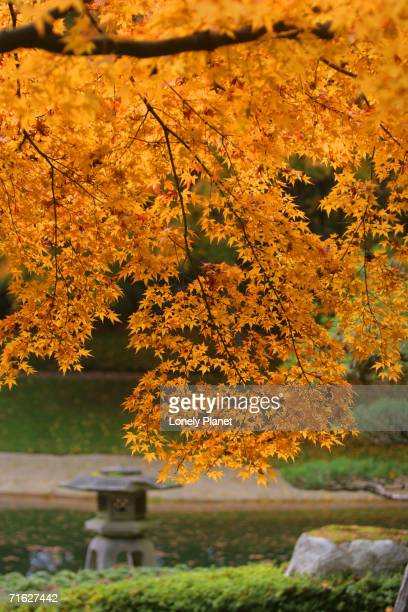 autumn leaves at nitobe japanese garden, university of british columbia, vancouver, canada - ubc stock pictures, royalty-free photos & images