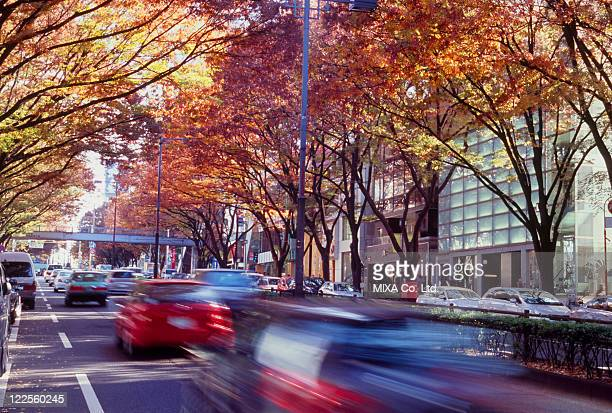 autumn leaves at omotesando, shibuya, tokyo, japan - 表参道 ストックフォトと画像