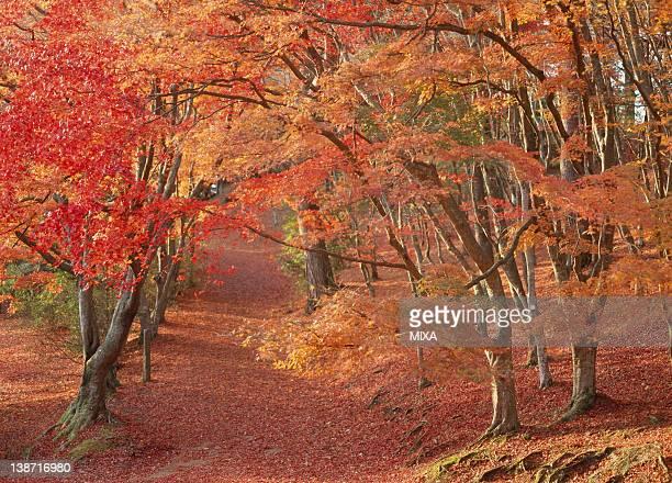 Autumn Leaves at Shuzenji Nature Park, Izu, Shizuoka, Japan