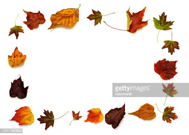 autumn leaves background - autumn stock pictures, royalty-free photos & images