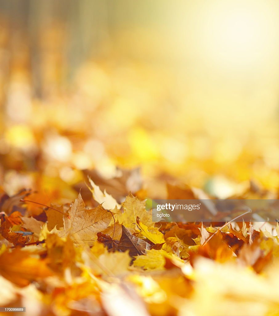 秋の葉のバックグラウンド : ストックフォト