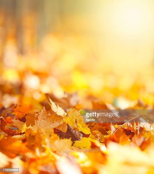 autumn leaves background - herfst stockfoto's en -beelden