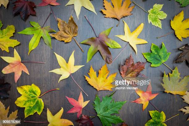 autumn leaves background - november background stock photos and pictures