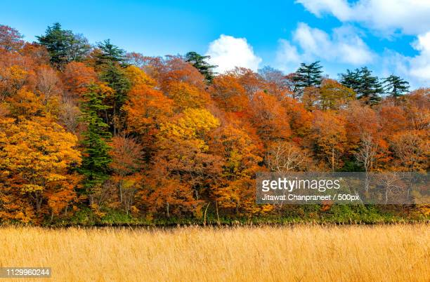 Autumn Leaves Background With Blue Sky In Sunny Day A Wonderful