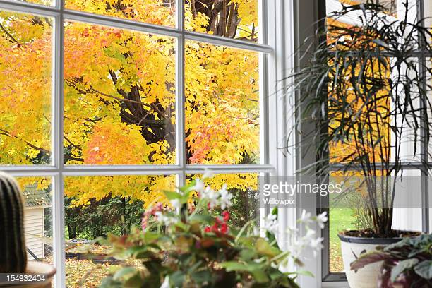 Autumn Leaves Beyond Bay Window Potted Plants