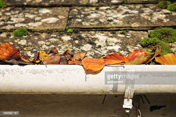 Autumn Leaves Blocking a Gutter