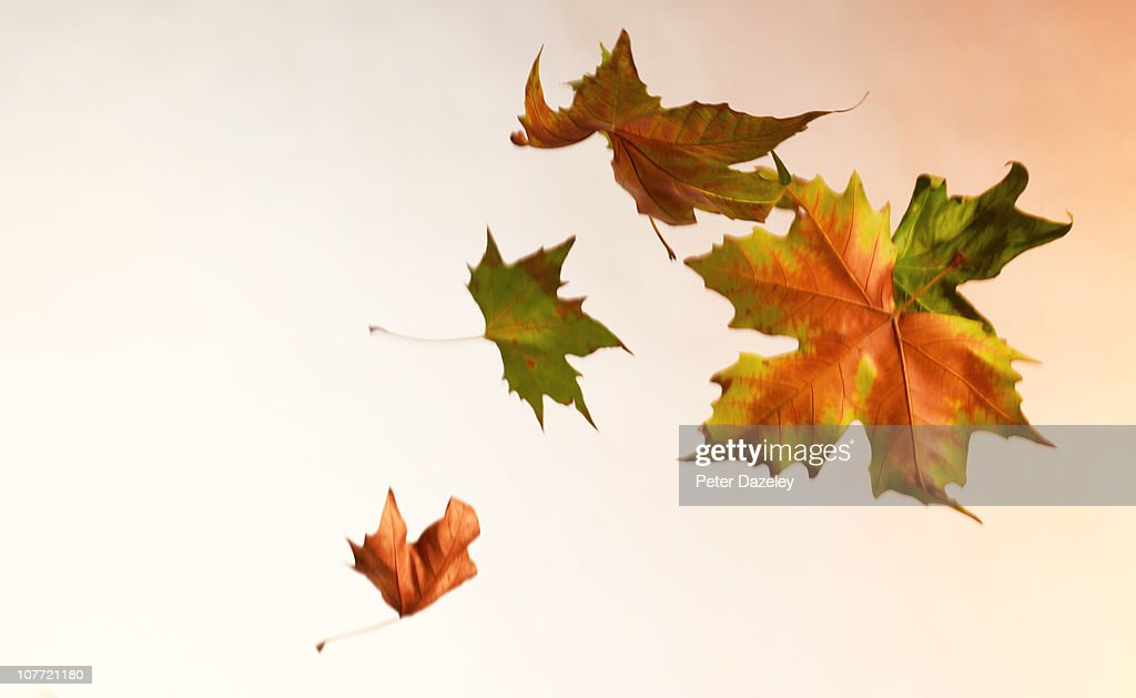 Autumn Leaves Blowing In The Wind High Res Stock Photo Getty Images