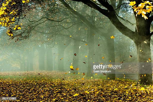 Autumn leaves blowing in the wind
