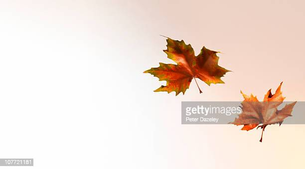 Autumn leaves blowing in the wind with copy space