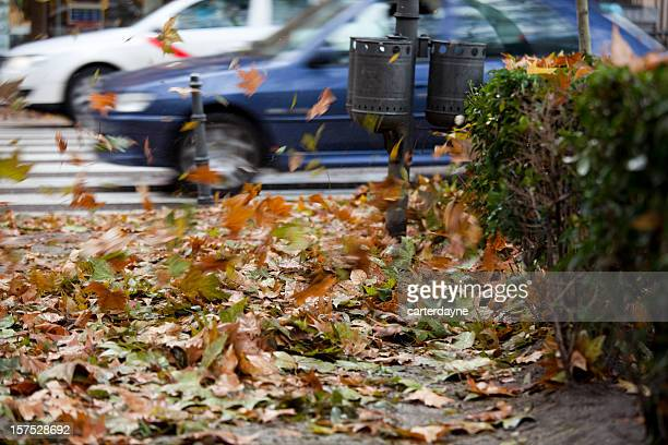 Autumn Leaves Blowing on Windy Cold Day, Madrid Spain