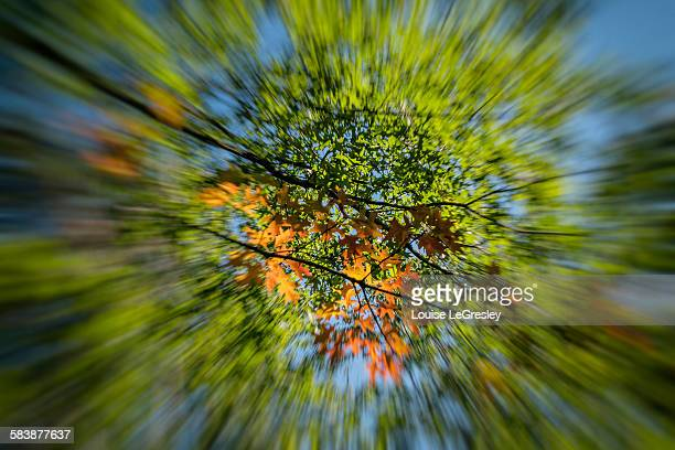 Autumn leaves, blurred motion zoom