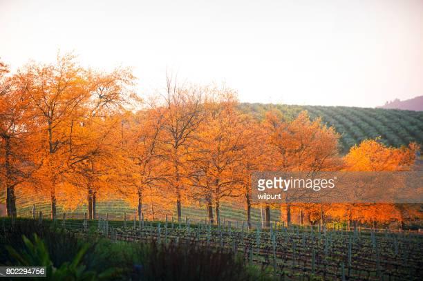 Autumn Leaves Cape Winelands