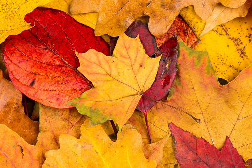 autumn leaves composition - gettyimageskorea