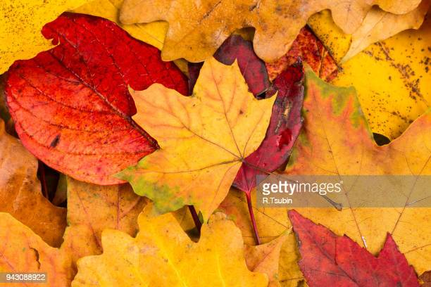 autumn leaves composition - september stock pictures, royalty-free photos & images