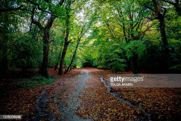 Autumn leaves cover the ground in Epping Forest in north-east London on October 21, 2020.
