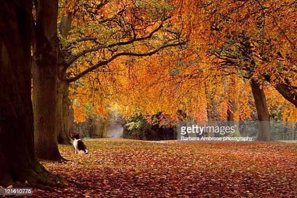 autumn leaves covered path - northampton imagens e fotografias de stock