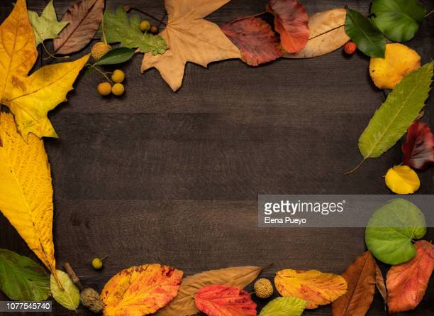 autumn leaves, fall border - elena blume stock-fotos und bilder
