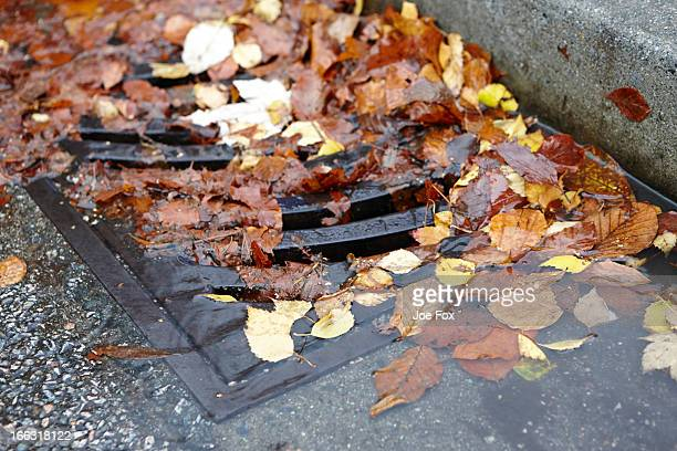 Autumn leaves fallen and clogging city drains