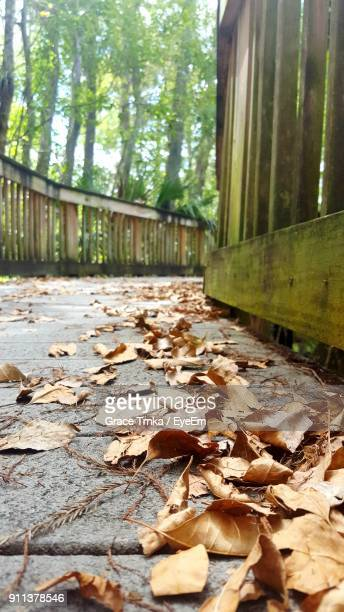 autumn leaves fallen in forest - cypress swamp stock photos and pictures