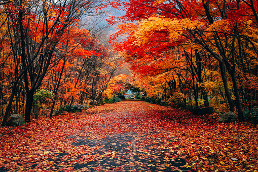 Autumn Leaves Fallen In Forest - gettyimageskorea