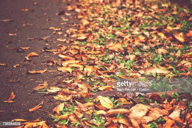 Autumn Leaves Fallen On Field