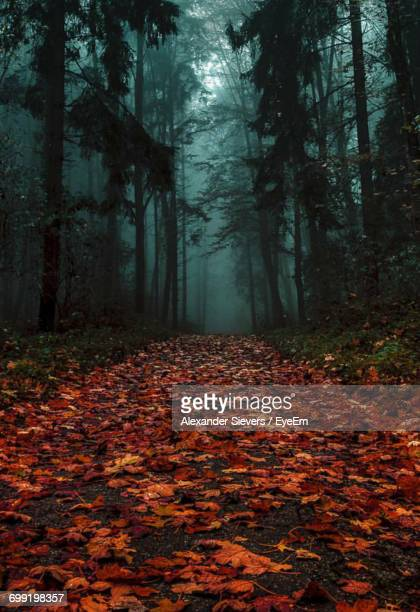 Autumn Leaves Fallen On Footpath In Forest During Foggy Weather
