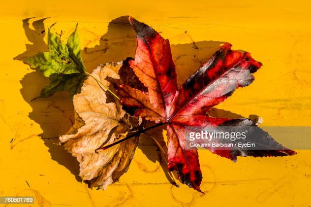 Autumn Leaves Fallen On Yellow Leaf