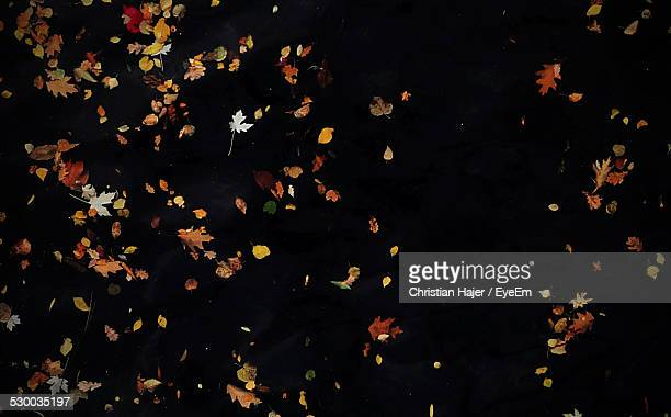 autumn leaves falling down - autumn falls stock pictures, royalty-free photos & images