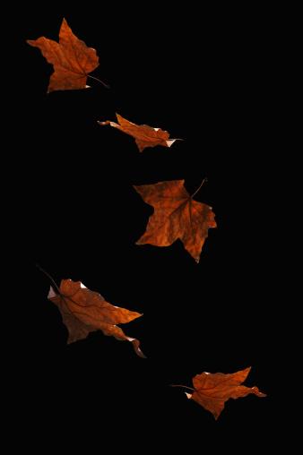 Autumn Leaves Falling - gettyimageskorea