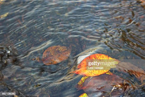 Autumn leaves float in the waters of the rivers.