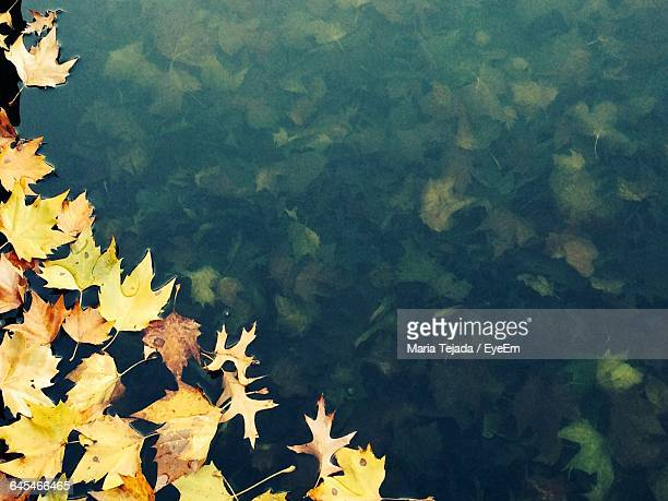 autumn leaves floating on water - maria tejada stock pictures, royalty-free photos & images