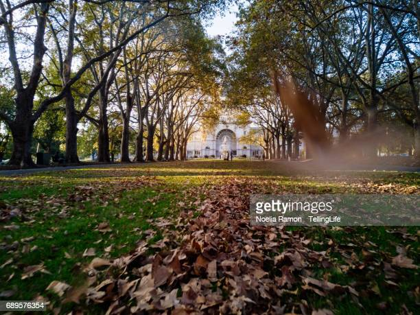 autumn leaves flying in the foreground, at the carlton gardens, melbourne - carlton gardens stock pictures, royalty-free photos & images
