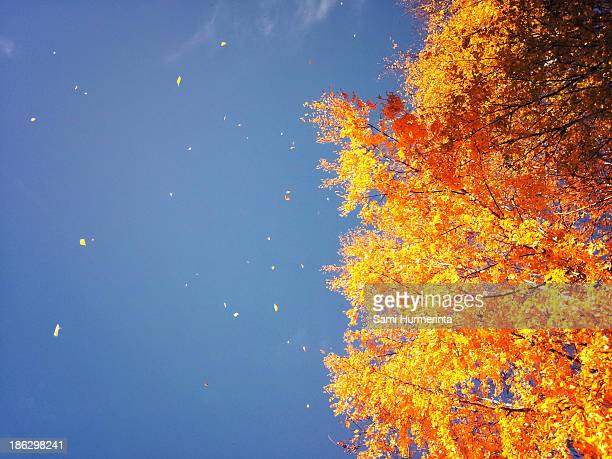 autumn leaves flying in the wind - jyväskylä stock photos and pictures