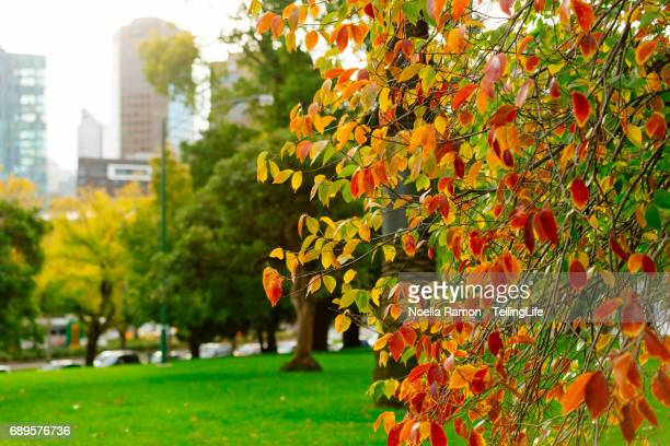 Autumn leaves in a tree