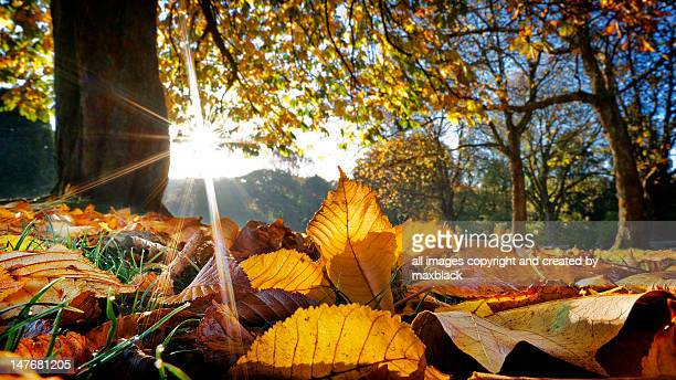 Autumn leaves in Botanical gardens, Glasgow