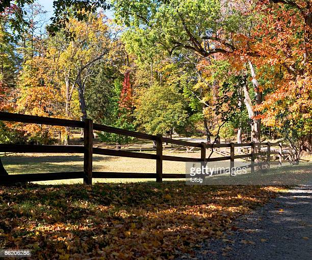 autumn leaves in countryside - westchester county stock photos and pictures