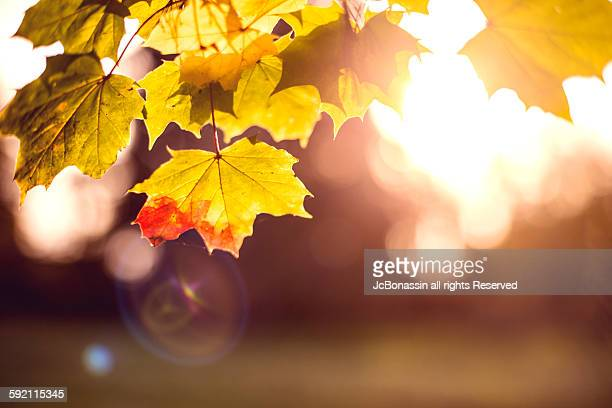 autumn leaves in england - jcbonassin stock pictures, royalty-free photos & images