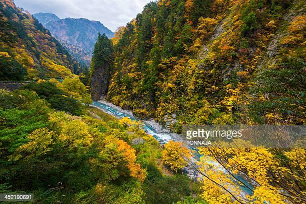 autumn leaves in kurobe gorge - 富山県 ストックフォトと画像