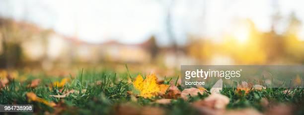autumn leaves in park - autumn falls foto e immagini stock