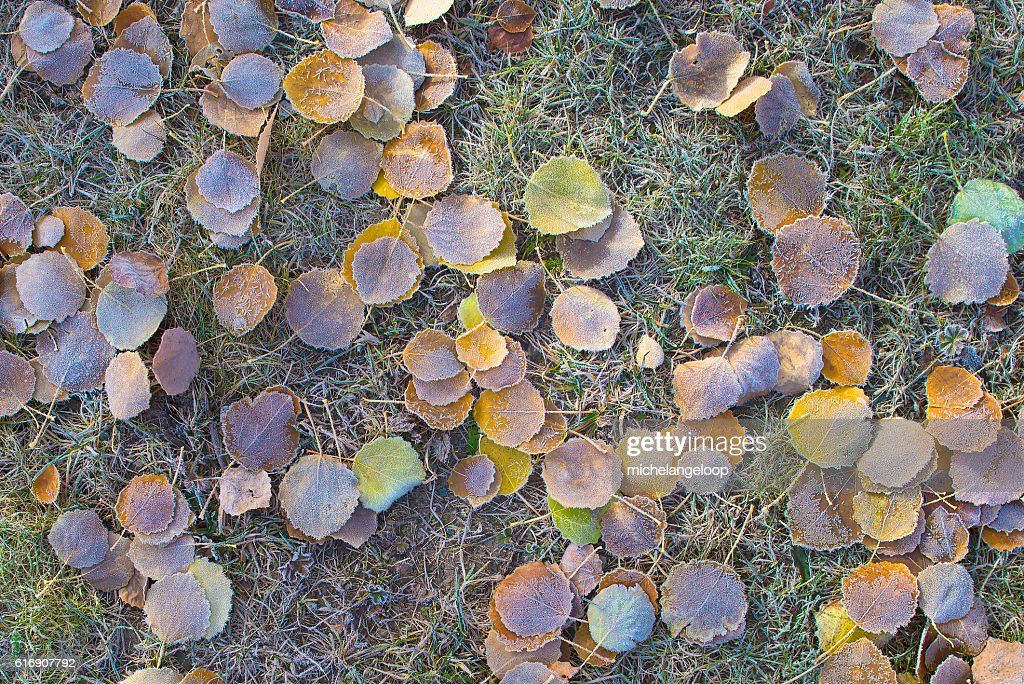 Autumn leaves in the meadow : Stock Photo