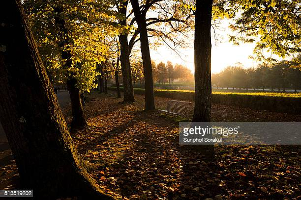 Autumn leaves in the park on top of Lucca's city wall during sunset