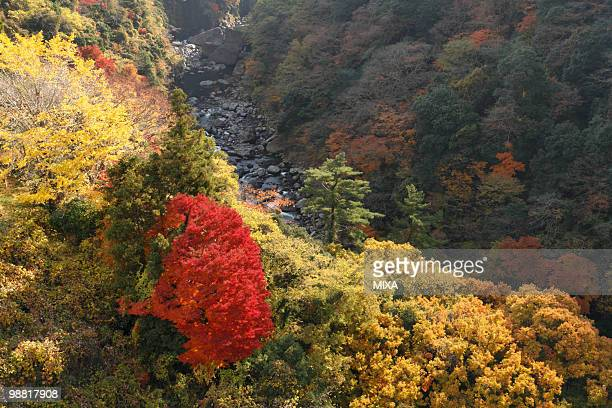 autumn leaves, minamiaso, kumamoto, japan - minamiaso kumamoto stock pictures, royalty-free photos & images