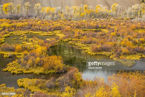 autumn leaves near pond - sun valley idaho stock photos and pictures