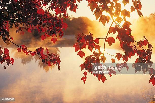 autumn leaves, new england, usa - outono - fotografias e filmes do acervo