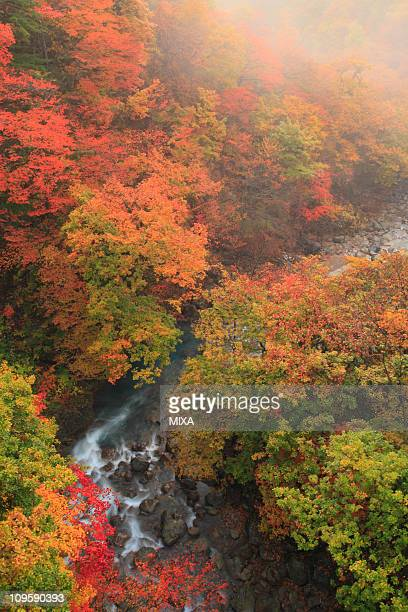 autumn leaves of matsukawa valley, hachimantai, iwate, japan - 八幡平市 ストックフォトと画像