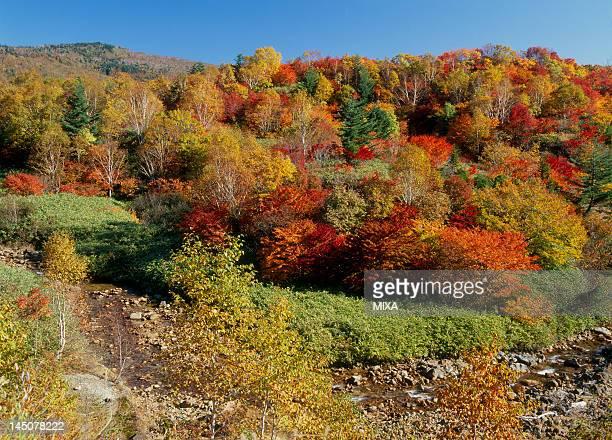 Autumn Leaves of Mount Hachimantai, Hachimantai, Iwate, Japan