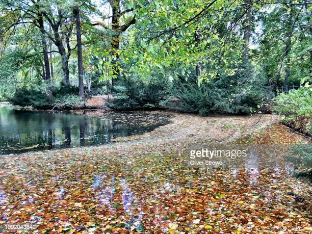autumn leaves collecting freshwater lake tiergarten