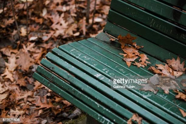 autumn leaves on a park bench - banco asiento fotografías e imágenes de stock