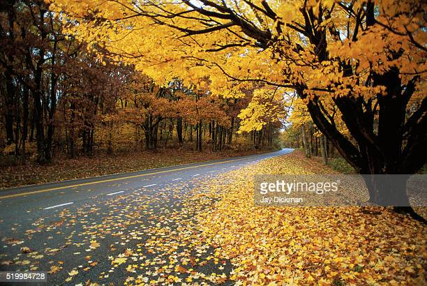 autumn leaves on a rural road - talk:shenandoah_national_park stock pictures, royalty-free photos & images