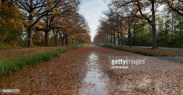 Autumn leaves on a treelined river, Gelderland, Holland